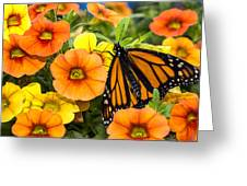 Monarch Among The Flowers Greeting Card