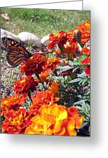 Monarch Among The Marigolds Greeting Card