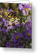 Monarch And Asters Greeting Card