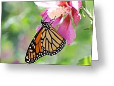 Monarch And Hibiscus No.2 Greeting Card