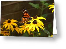 Monarch At Rest Greeting Card