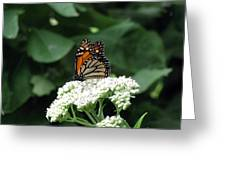 Monarch Butterfly 45 Greeting Card