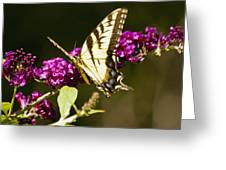Monarch Butterfly 5 Greeting Card