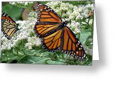 Monarch Butterfly 52 Greeting Card