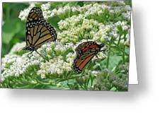 Monarch Butterfly 56 Greeting Card