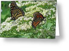 Monarch Butterfly 57 Greeting Card