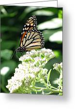 Monarch Butterfly 58 Greeting Card