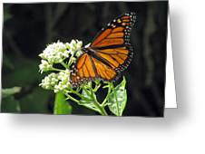 Monarch Butterfly 59 Greeting Card