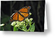 Monarch Butterfly 60 Greeting Card