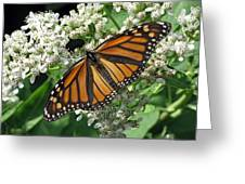Monarch Butterfly 62 Greeting Card
