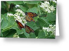 Monarch Butterfly 63 Greeting Card