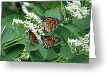 Monarch Butterfly 64 Greeting Card