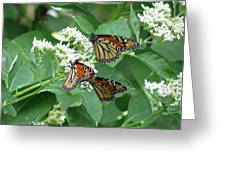 Monarch Butterfly 65 Greeting Card