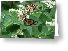 Monarch Butterfly 66 Greeting Card
