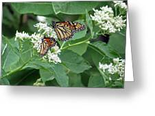 Monarch Butterfly 67 Greeting Card