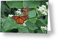 Monarch Butterfly 68 Greeting Card