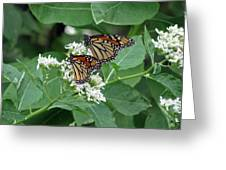 Monarch Butterfly 70 Greeting Card