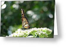 Monarch Butterfly 72 Greeting Card