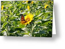 Monarch Butterfly And Guest Greeting Card