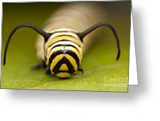 Monarch Butterfly Caterpillar I Greeting Card