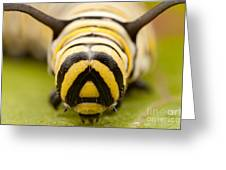 Monarch Butterfly Caterpillar II Greeting Card
