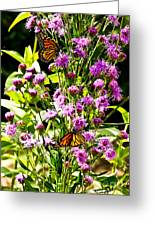 Monarch Butterfly Couple Greeting Card