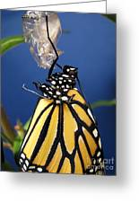 Monarch Butterfly Emerging From Chrysalis Greeting Card