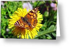 Monarch Butterfly Feeding On A Yellow Dandelion Flower Greeting Card