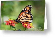 Monarch Butterfly On Lantana Flowers Greeting Card