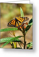 Monarch Butterfly On Plant With Eggs Greeting Card