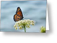 Monarch Butterfly On River Greeting Card
