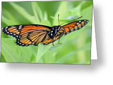 Monarch Butterfly Rocking Chair Greeting Card