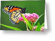 Monarch Butterfly Simple Pleasure Greeting Card