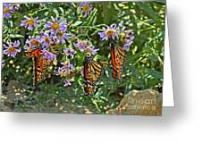 Monarch Butterfly Trio Greeting Card