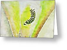 Monarch Caterpillar - Digital Watercolor Greeting Card