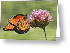 Monarch Flutterby Greeting Card