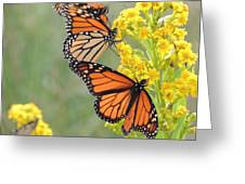 Monarch Gathering Greeting Card by Laurence Van Oliver