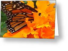 Monarch In The Marigold Greeting Card