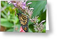 Monarch Ins 15 Greeting Card