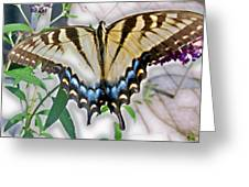 Monarch Majesty Greeting Card