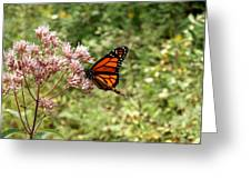 Monarch Of The North Greeting Card