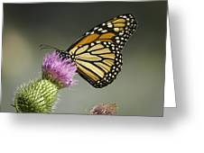 Monarch Of The Wild Greeting Card