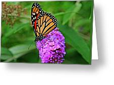 Monarch On A Butterfly Bush Greeting Card