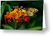 Monarch On Pride Of Barbados Greeting Card