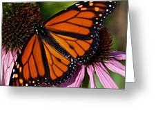 Monarch On Purple Coneflower Greeting Card
