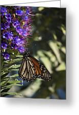 Monarch On Purple Flower Greeting Card