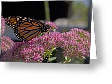 Monarch On Sedum Greeting Card
