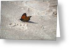 Monarch On The Beach Greeting Card