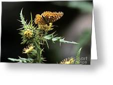 Monarch On Thistle Greeting Card
