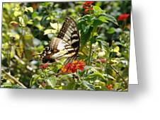 Monarch Pause Greeting Card